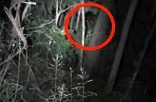 جانوری با چشمان قرمز در جنگلهای استرالیا