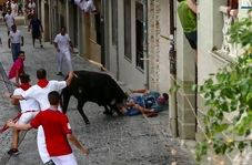 لحظه حمله گاو به تماشاگر جوان