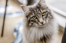 کنجکاوی گربه کارشناس برنامه حین پخش زنده خبر!
