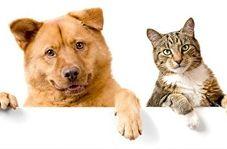 پایان تلخ دعوای سگ و گربه