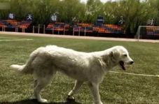 سگی که در مسابقه دو و میدانی دانشجویان دوم شد!