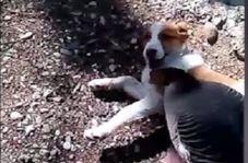 دوستی جالب سگ و غاز!