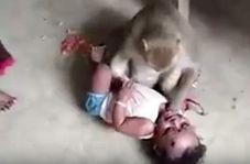 لحظه تلاش میمون برای ربودن کودک!