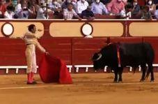زجرکش کردن یک گاو در یک مراسم غربی