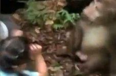وقتی میمون وحشی بر سر غذا عصبانی میشود