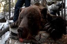کشتن یک خرس هنگام خواب زمستانی برای سرگرمی توسط یک فرماندار!