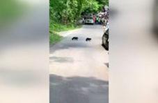 برخورد فوق متمدنانه با یک خرس و تولههایش