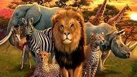 باهوش ترین حیوانات جهان کدام حیوانات هستند؟