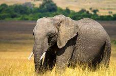 تصادف دلخراش فیل با قطار مسافربری