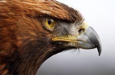 نجات پرنده شکاری توسط دوستدار محیط زیست