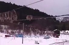روش جالب میمونها برای جلوگیری از خیس شدن در روزهای برفی