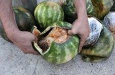 کشف محموله عجیب تریاک وسط بار هندوانه!