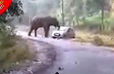 حمله فیل خشمگین به اتومبیل معلمان!