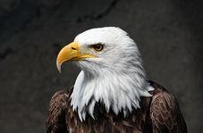 نجات عقاب گرفتار در چنگ اختاپوس در اقیانوس آرام + فیلم