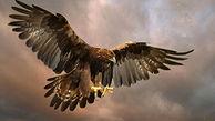 زیباییهای دنیا از نگاه عقاب!