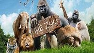 مقایسه شگفت انگیز حیوانات جهان از بزرگترین تا کوچکترین اندازه