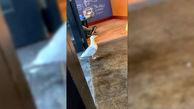 دزدی مرغ دریایی از یک کافه! + فیلم