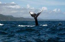 محققان آواز نهنگ را ضبط کردند