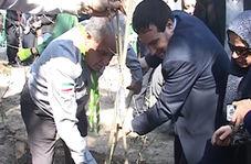 کاشت درخت به یاد شهدا