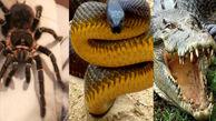 زندگی مرد فرانسوی میان مرگبارترین حیوانات جهان!