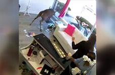 حمله یک گوزن به سالن آرایشگاه
