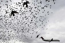 لذت پرواز در آسمان در کنار پرندگان