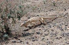 نجات بزمجه از چاه با تلاش محیط بانان در شاهرود