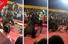 لحظه وحشتناک حمله خرس به مربی سیرک