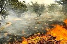 آتشسوزی در جنگل پسر و پدر 70 ساله را غافلگیر کرد