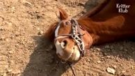 اسبی که دست هنرپیشههای هالیوود را هم از پشت بست