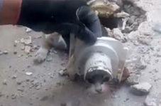 نجات گربهای در خرمآباد که سرش در راهآب چاه گیر کرده بود