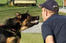 حمله سگ پلیس آمریکا به مظنون مشاجره خانوادگی