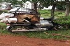 نجات سگها از قفس کوچک یک قصاب