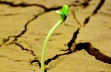 تبدیل بیابانهای خشک به زمینهای حاصلخیز!