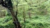 طبیعت بکر و چشمنواز جنگلهای هیرکانی