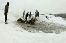 نجات یک گله اسب از غرق شدن در رودخانهای یخ زده