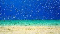 دوستی پرندههای دریایی و مردم در سواحل خلیج فارس