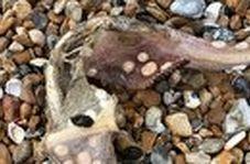 پیدا شدن جانور عجیب الخلقه در ساحل!