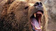 حمله خرس به هواپیمای تفریحی