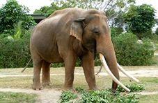 حمله مرگبار فیل به یک مرد