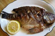 ماهی پرطرفدار تیلاپیا چه بلایی بر سر شما میآورد؟