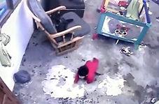 اقدام گربه قهرمان در نجات جان یک نوزاد