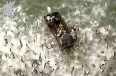 صید بیرحمانه ماهی در کنتاکی آمریکا + فیلم
