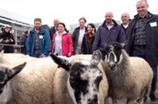 مراسم سنتی گذراندن گوسفندان از روی پل لندن برگزار شد