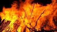 فیلم| آتشسوزی در منطقه حفاظت شده البرز مرکزی کجور نوشهر
