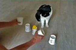 بازی با باهوشترین گربه دنیا