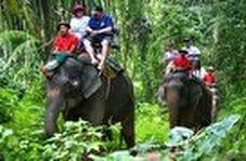 توانایی دیدنی فیلها در ماساژ دادن و نقاشی کشیدن!