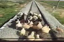 حادثه خونین بر روی ریل قطار!
