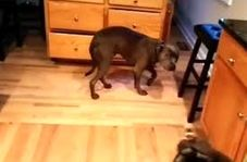 وقتی سگها هم از اشتباهشان خجالت میکشند