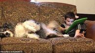 استفاده از پای سگ به جای قلم هوشمند